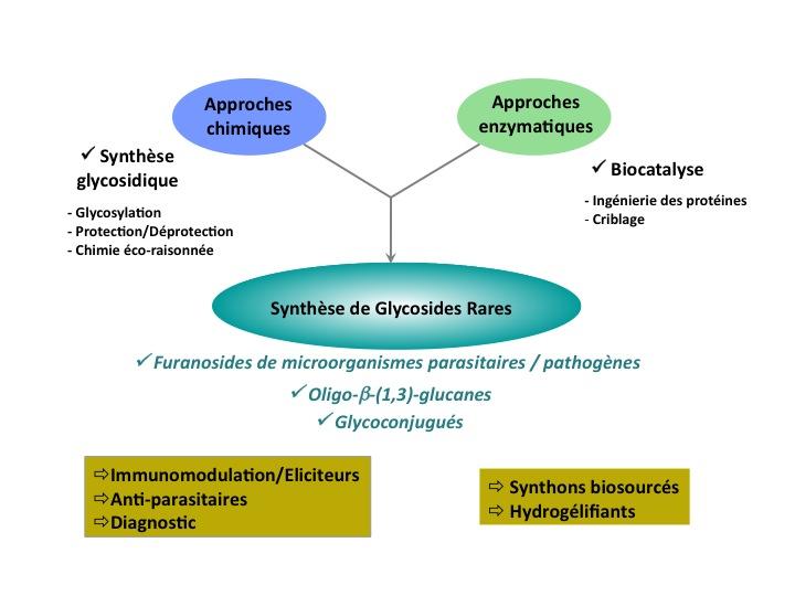ENSCR-Recherche-Equipe COS-Glyco2